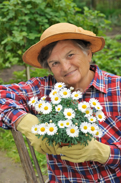 Senior woman gardening Stock photo © brozova