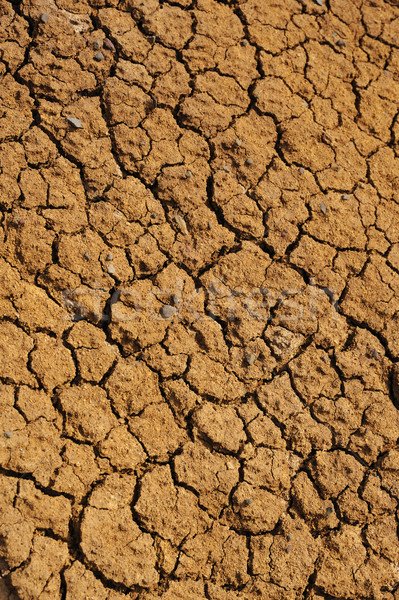 Stock photo: Cracked dry ground texture