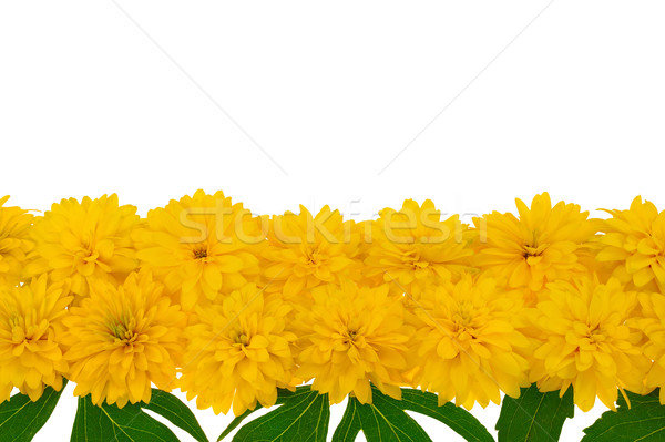 Stock fotó: Virág · csetepaté · textúra · levél · háttér · nyár