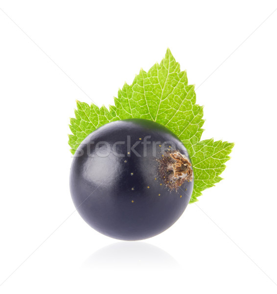 Fresh juicy black currant with green leaf Stock photo © brulove