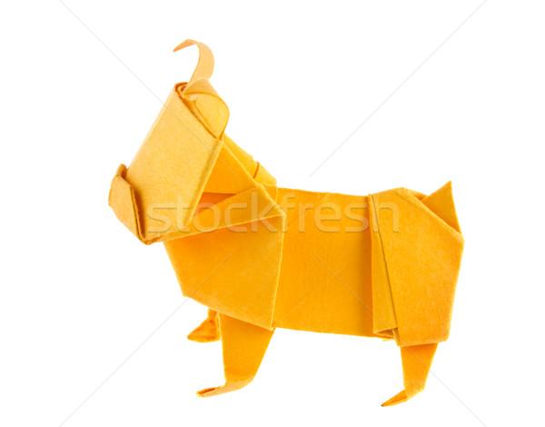 Turuncu köpek buldok origami yalıtılmış beyaz Stok fotoğraf © brulove