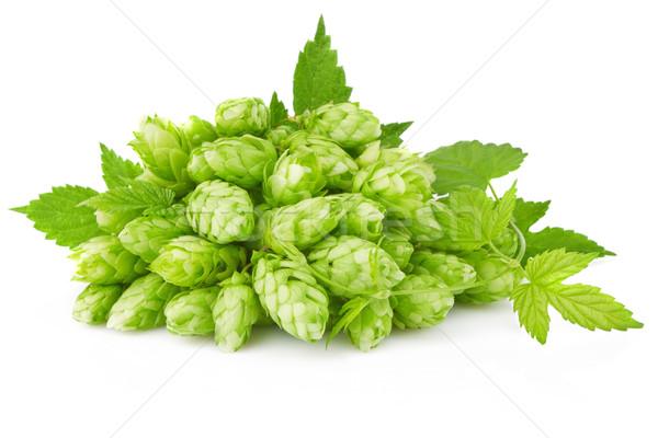 Hop foglia verde ramoscello isolato bianco foglia Foto d'archivio © brulove