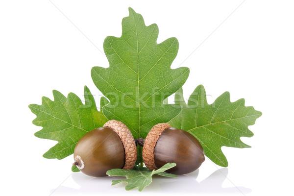 Dojrzały żołądź zielone liście odizolowany biały owoców Zdjęcia stock © brulove