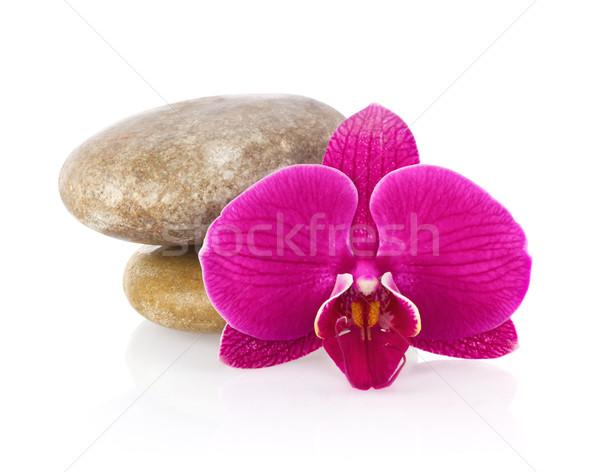 Bloem orchidee zee steen geïsoleerd witte Stockfoto © brulove