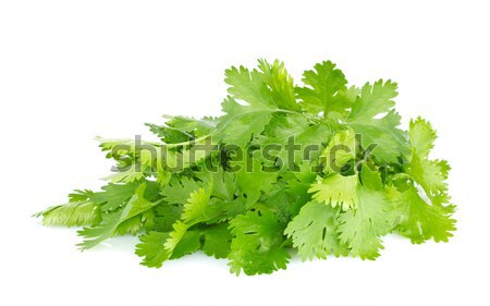 Fresh juicy organic bundle of cilantro Stock photo © brulove