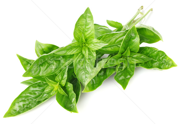 twig fresh basil Stock photo © brulove