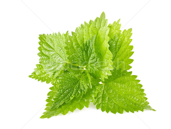 Green leaves of nettle Stock photo © brulove
