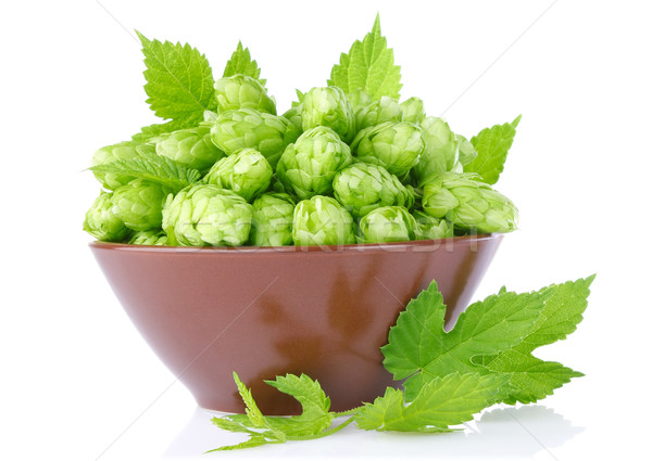 hop in clay tureen with green leaf and twig Stock photo © brulove