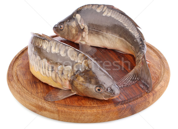 Frescos peces carpa aislado blanco Foto stock © brulove