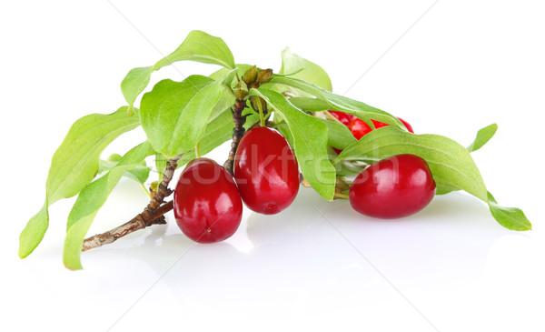 Branche cerise laisse isolé blanche Photo stock © brulove