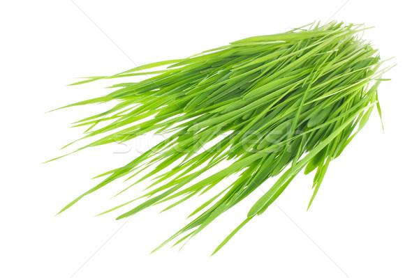 Vert blé seigle isolé blanche Photo stock © brulove
