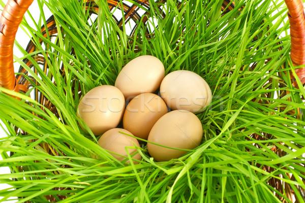 Vers organisch eieren groen gras geïsoleerd witte Stockfoto © brulove
