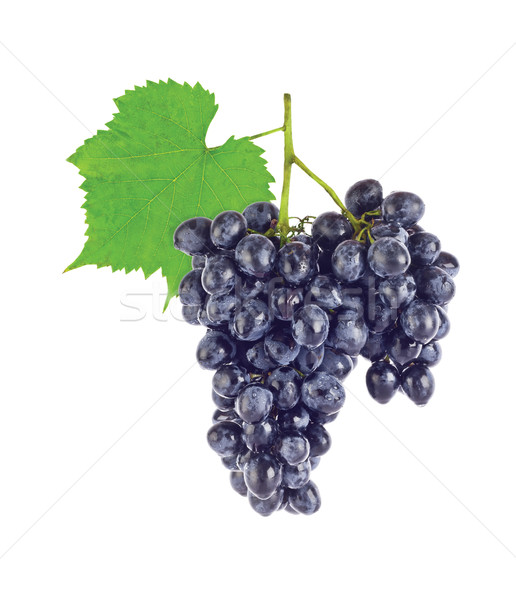 Cluster fresh juicy organic grapes with green Stock photo © brulove