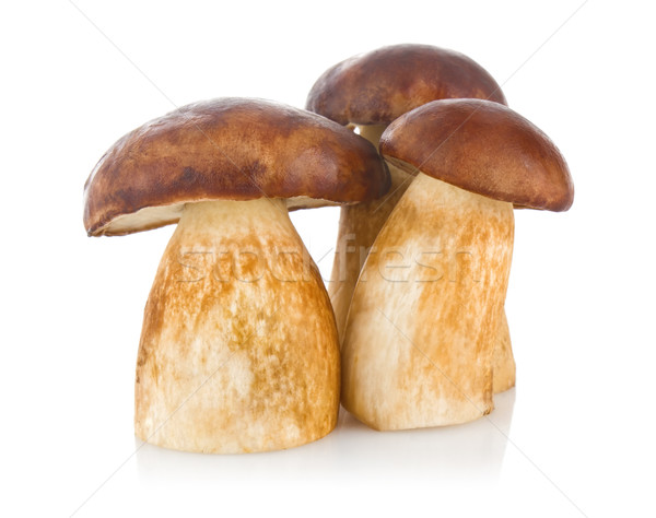 three cep (boletus edulis) Stock photo © brulove