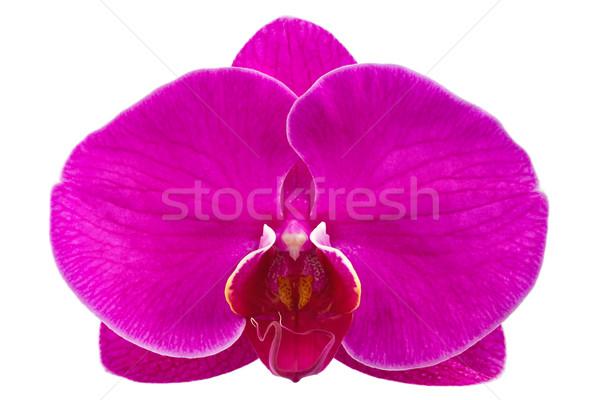 Flor orquídea isolado branco planta Foto stock © brulove