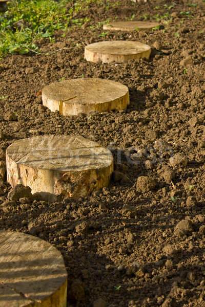 Round birchen stump Stock photo © brulove