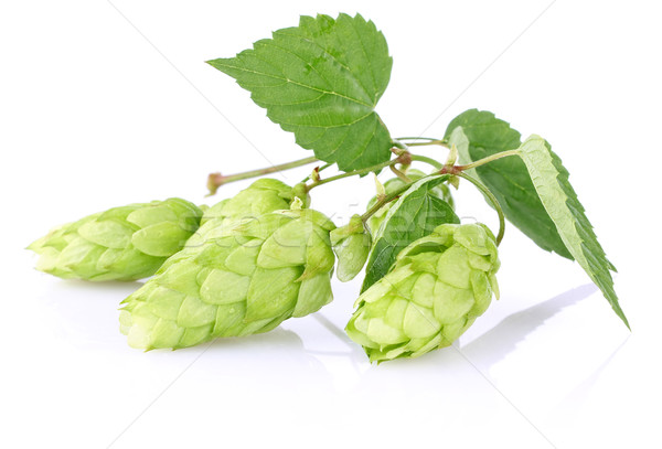 twig aromatic hop with green leaf Stock photo © brulove