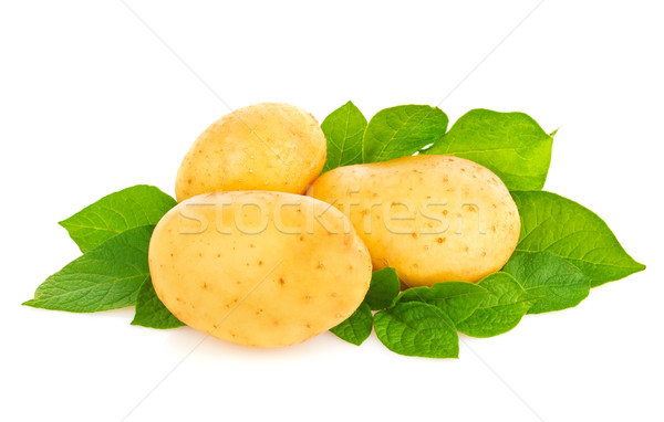 Stock photo: Young organic potatoes with green leaf