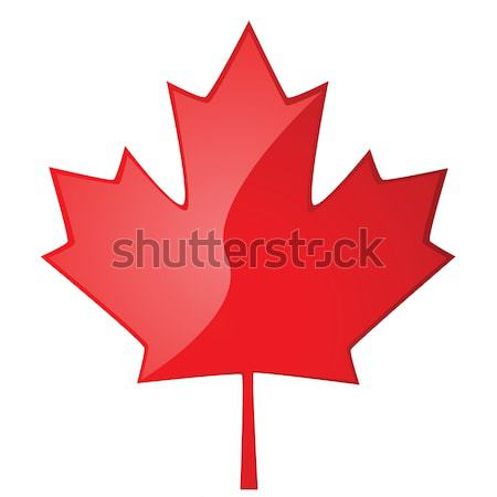 Maple leaf Stock photo © bruno1998