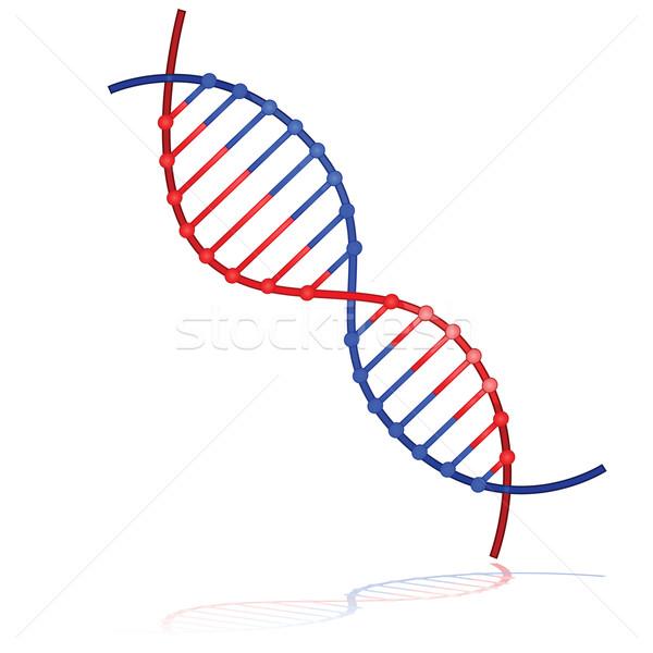 DNA strand Stock photo © bruno1998