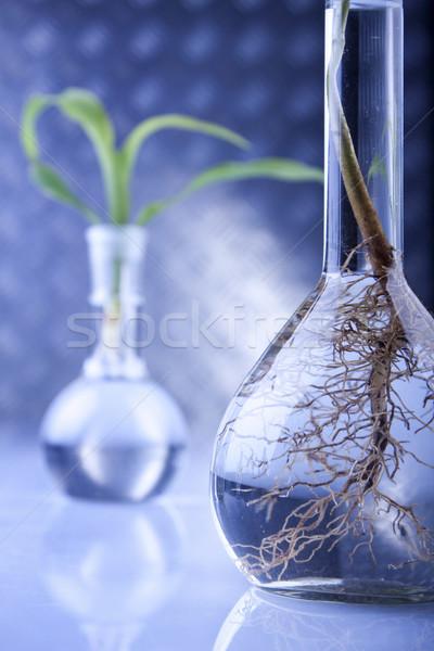 Сток-фото: растений · лаборатория · генетический · науки · медицинской · природы