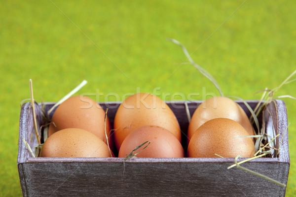 イースター 動物 休日 草 自然 卵 ストックフォト © BrunoWeltmann