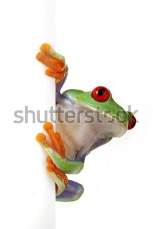 Stock fotó: Zöld · béka · szem · narancs · piros · kő