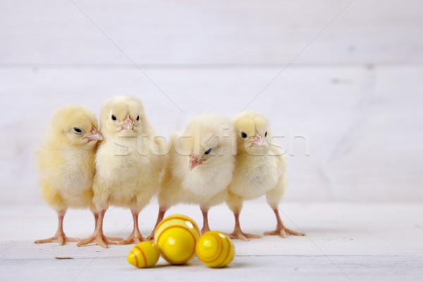 Stockfoto: Pasen · kip · eieren · decoratie · witte · vintage