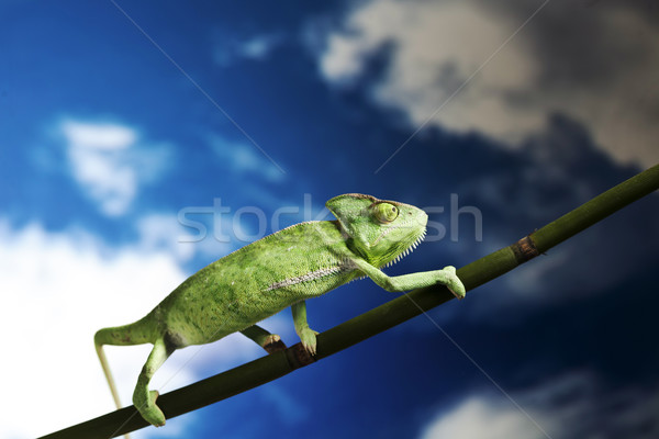 Groene kameleon kleurrijk foto boom Stockfoto © BrunoWeltmann