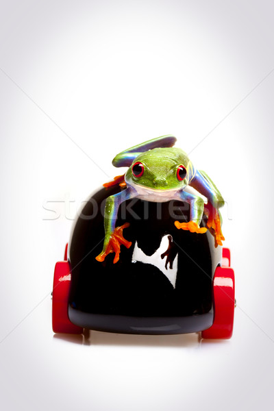 Stock photo: Green Frog in concepts