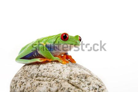 Verde sapo conceitos olho natureza laranja Foto stock © BrunoWeltmann