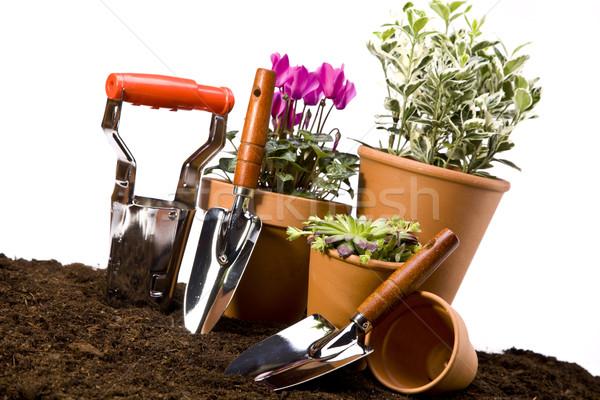 Foto stock: Flores · jardim · ferramentas · céu · flor · grama