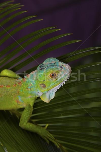 Foto stock: Verde · lagarto · casa · sol · areia · rocha
