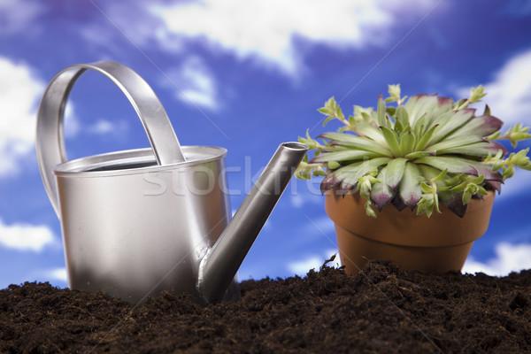 ストックフォト: 花 · 庭園 · ツール · 空 · 花 · 草