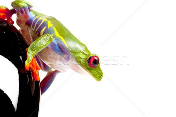 Stock fotó: Zöld · béka · fogalmak · szem · narancs · piros