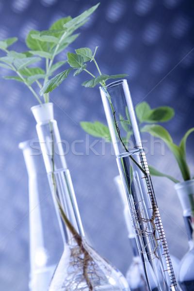 Bitkiler laboratuvar genetik bilim tıbbi doğa Stok fotoğraf © BrunoWeltmann