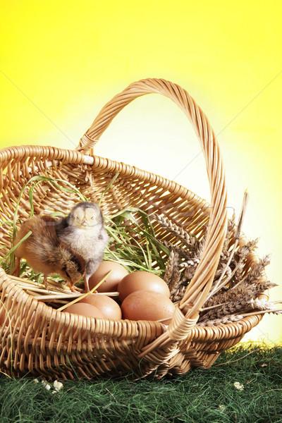 Сток-фото: Пасху · животные · трава · природы · фон · таблице