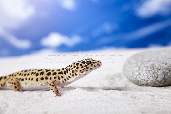 Geco retrato leopardo sol arena animales Foto stock © BrunoWeltmann