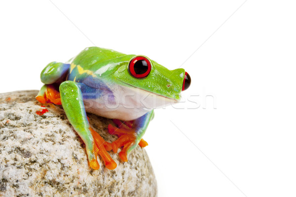 Verde sapo olho laranja vermelho pedra Foto stock © BrunoWeltmann