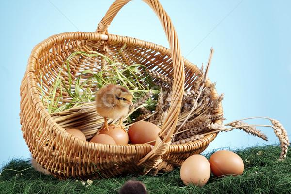 Húsvét állatok fű természet háttér asztal Stock fotó © BrunoWeltmann