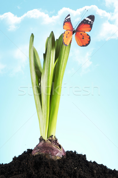 Gardening concept Stock photo © BrunoWeltmann