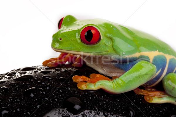 Stok fotoğraf: Yeşil · kurbağa · kavramlar · göz · turuncu · kırmızı