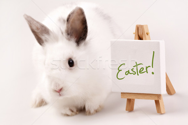 Easter Animals, holiday concept Stock photo © BrunoWeltmann