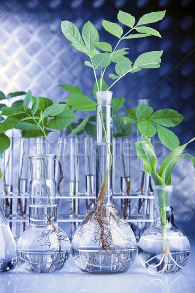 Plantas laboratório genético ciência natureza folha Foto stock © BrunoWeltmann
