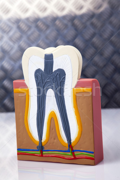 Dental equipment, teeth care Stock photo © BrunoWeltmann