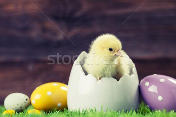 Easter chicken in egg Stock photo © BrunoWeltmann