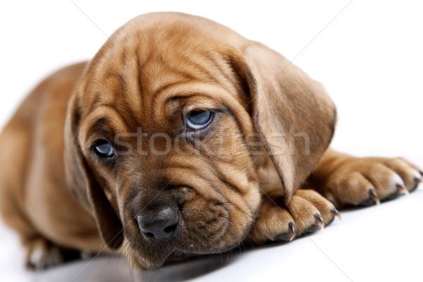 Stock fotó: Fiatal · aranyos · kutyák · csoport · vicces · fehér