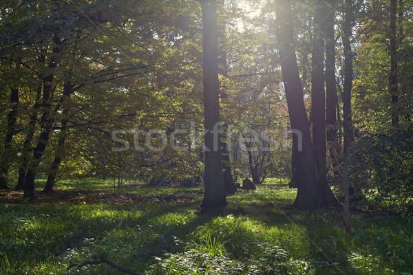 Beautiful, autumn scenery in the park.  Stock photo © BrunoWeltmann