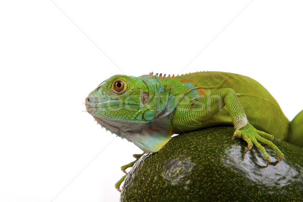 Stockfoto: Groene · hagedis · huis · zon · achtergrond · zand