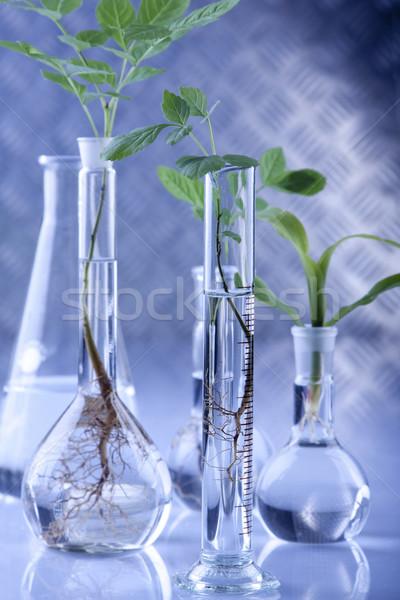 Roślin laboratorium genetyczny nauki medycznych charakter Zdjęcia stock © BrunoWeltmann